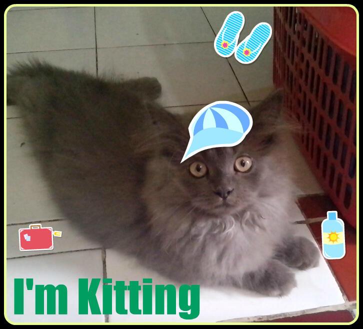 Terjual Jual Kucing Persia Lucu Sehat Murah Di Jakarta