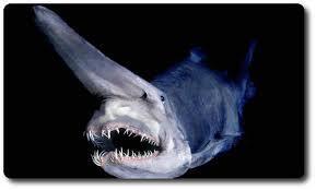 Jenis Ikan Hiu Yang Memiliki Penampakan Menyeramkan