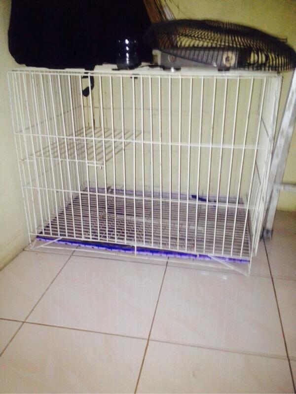 Kandang kucing tingkat murah