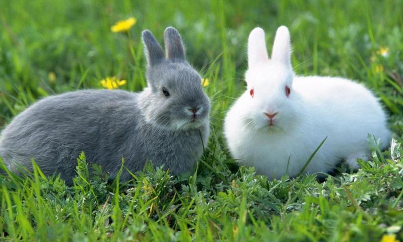 6 hewan yang nyaman untuk dipelihara + Manfaatnya gan