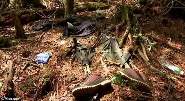 Rahasia Angker Aokigahara, Hutan Kematian di Jepang