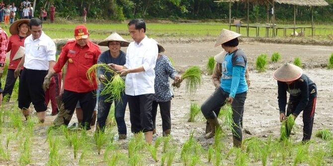 Pemerintah Jokowi Mau Pindahkan Ibukota ke Sampit atau Pangkalan Bun