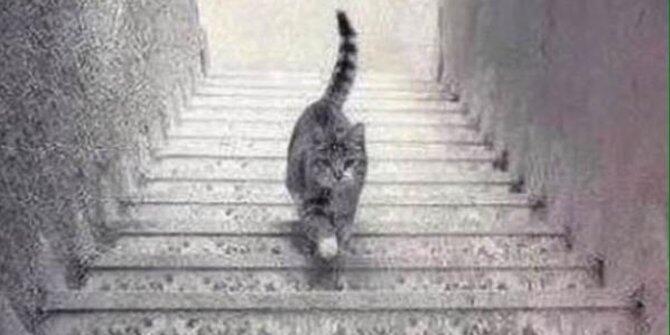 Debat Terpanas di Dunia, Kucing Ini Naik atau Turun Tangga?