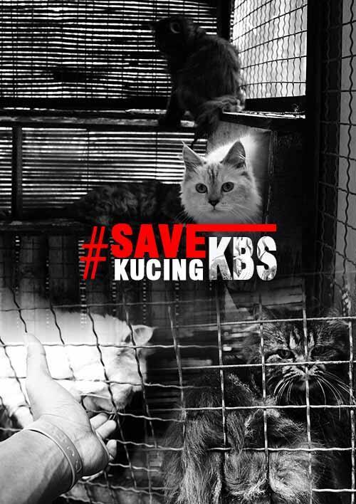 Donasi untuk Kucing Kebun Binatang Surabaya