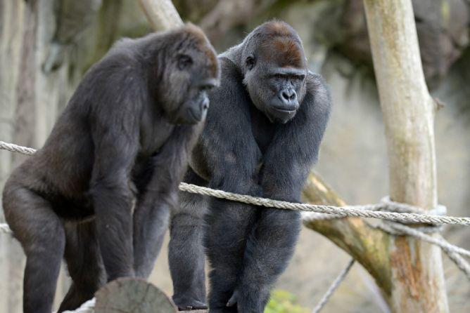13 Spesies Amat Terancam Punah di Dunia