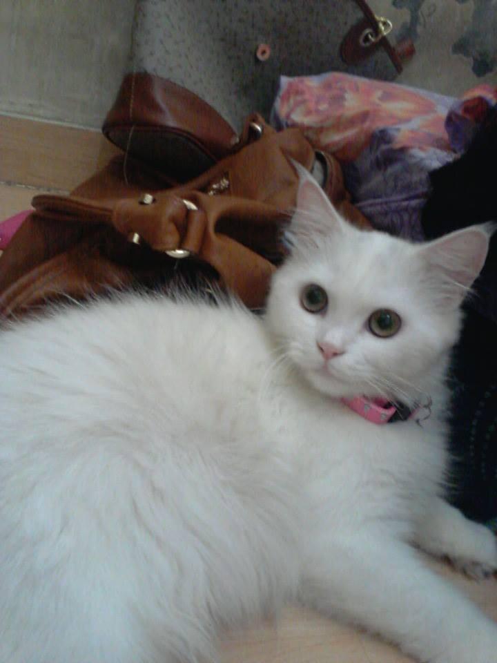 Kucing Cantik Ini Bikin Agan Illfeel (Ngakak)
