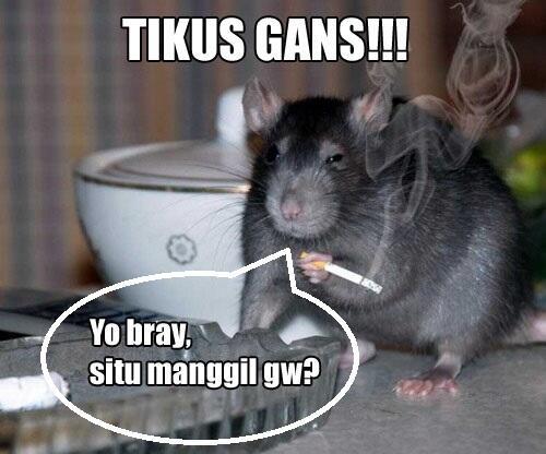 Ternyata Ini Gans, Hewan Paling Berbahaya Di Indonesia (Di Dunia?!)