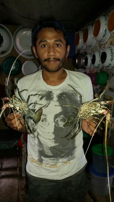 usaha pembesaran lobster air laut