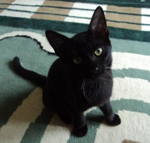 Download 65+  Gambar Kucing Dibawah Meja Kartun Terlihat Keren HD