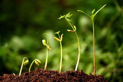 Seed of Success (Benih-Benih Kesuksesan)