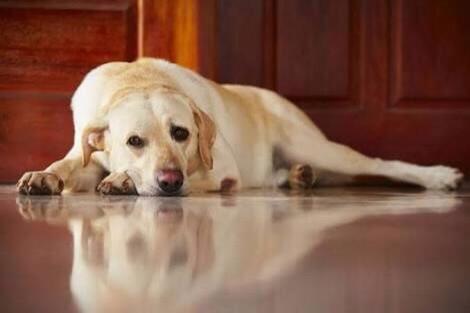 Fakta tentang anjing sebagai hewan peliharaan