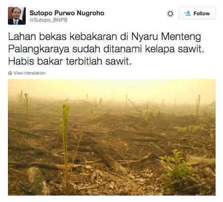 [ o0o siapa dia '] ajaib tumbuh bibit sawit di tanah bekas pembakaran hutan