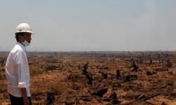 Jokowi : Butuh Waktu 3 TAHUN Atasi Kebakaran Hutan !!