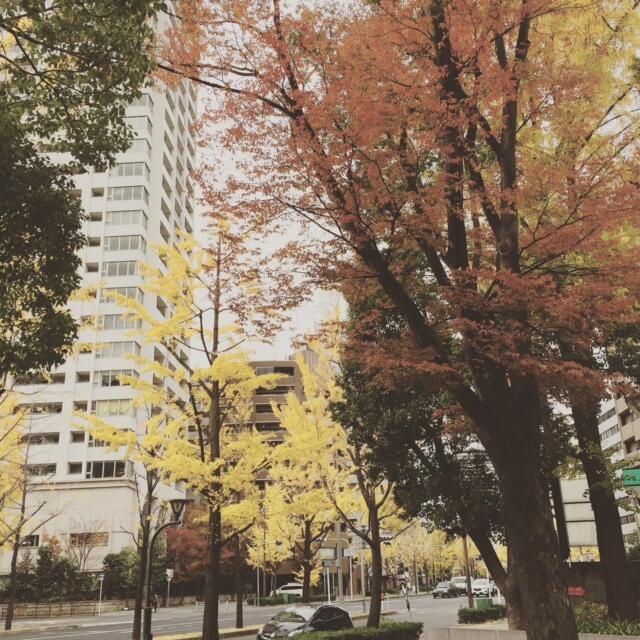 (bye bye) musim gugur di Jepang!