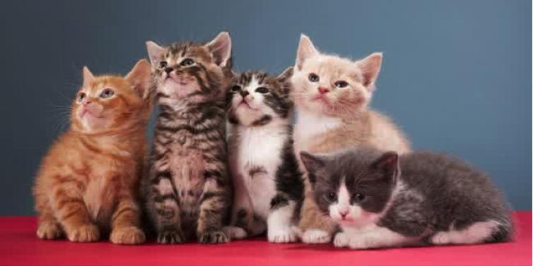 Kucing Juga Makhluk Hidup, Maka Berikan 7 Perhatian Ini Kepada Kucing Milik Agan