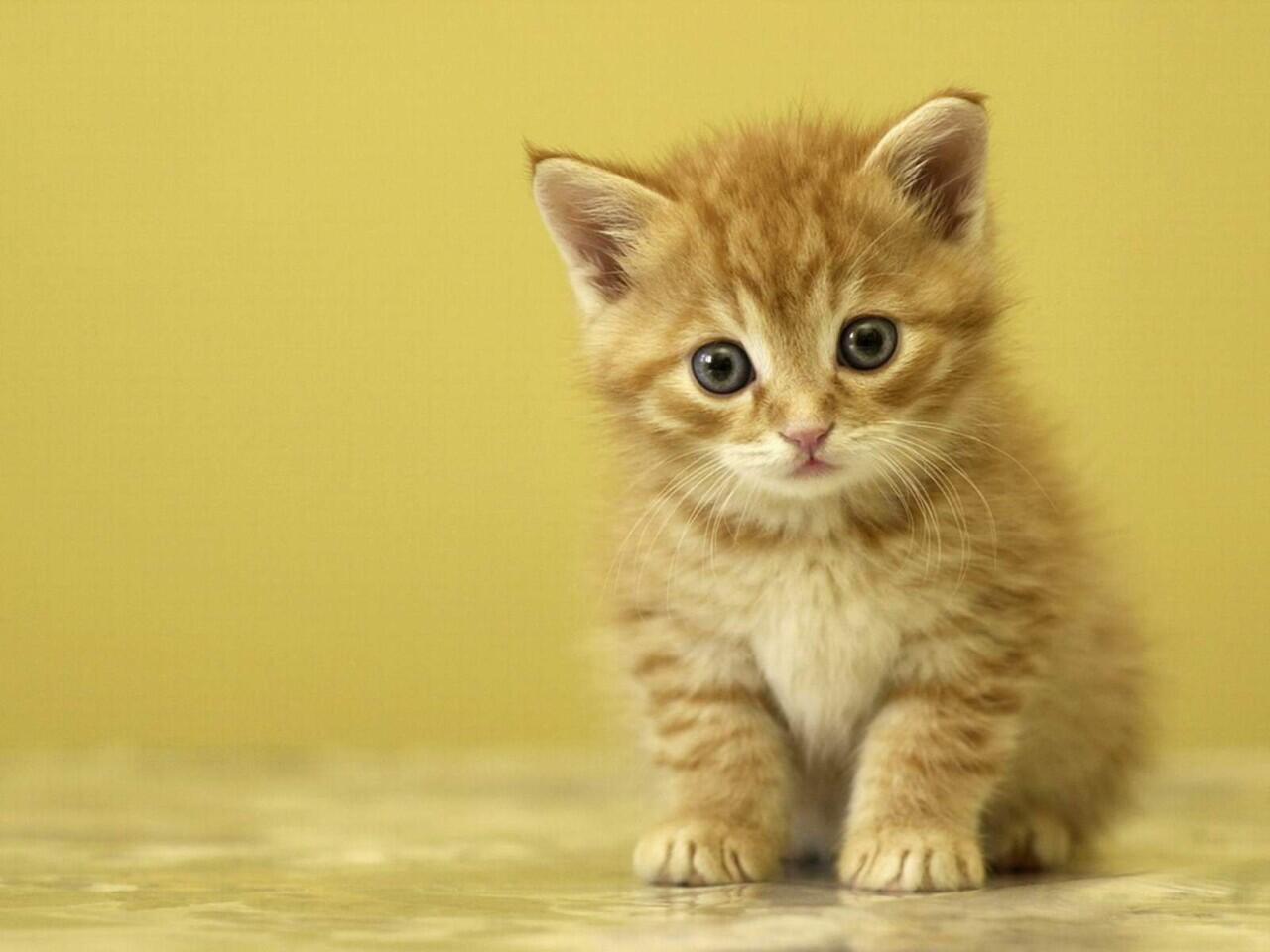 Jangan Buru-Buru Mengusir Kucing yang Datang Saat Kita Makan, Ini Sebabnya!