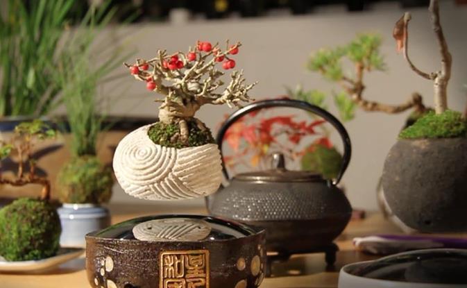 Bonsai Mengawang / Levitasi, Inovasi Baru Cara Menanam Bonsai