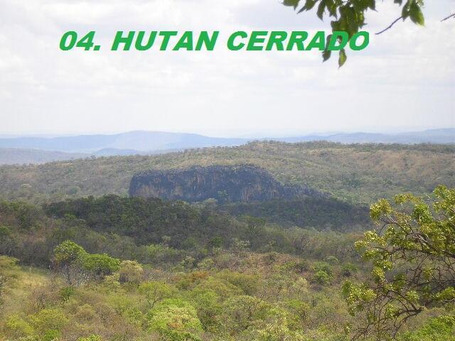 11 Hutan Terbesar di Dunia yang Kian Terancam !!!