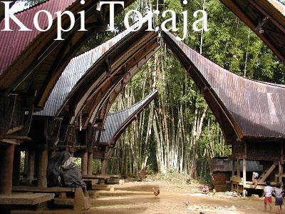 MENGENAL KOPI NUSANTARA, KOPINYA INDONESIA