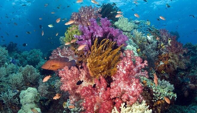 8 Fakta Keren Soal Indonesia yang Patut Dibanggakan Pada Dunia