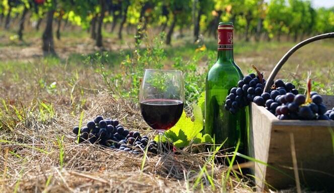 Bangsa Armenia Adalah Pembuat Wine Pertama