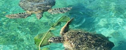 Yuk, Mengenal Kepulauan Derawan!