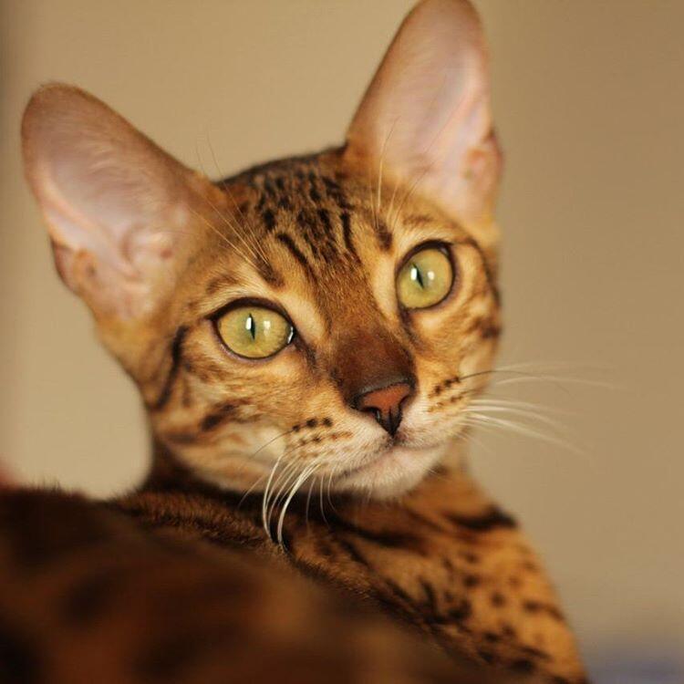 Kode-Kode Kucing Yang Sering Diabaikan | KASKUS