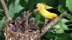 """""""?"""" Burung Tinggal Anak """"?"""" Burung Apaan Tuh?"""
