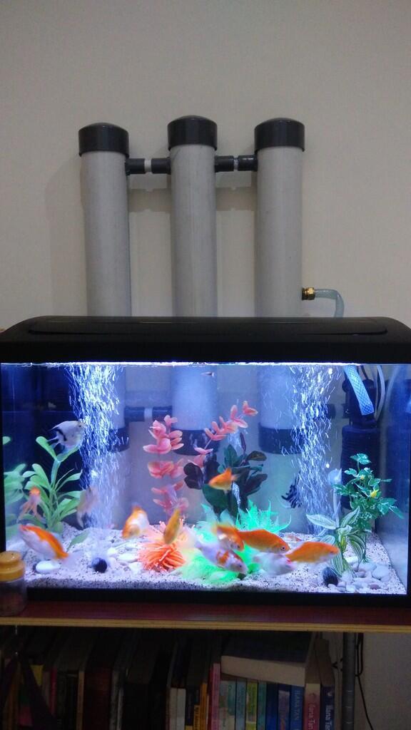 Tips Membuat Filter Aquarium Tanpa Kuras Air Selamanyaaaaa 100 Tahun