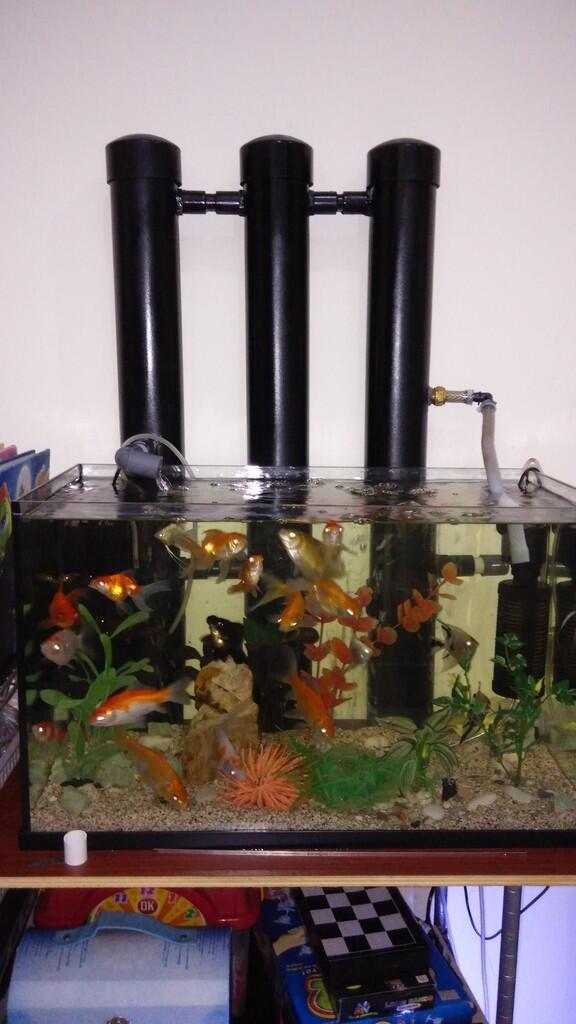 Membuat Filter Aquarium Tanpa Kuras - 1000+ Aquarium Ideas