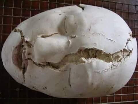 Roti Organ Manusia