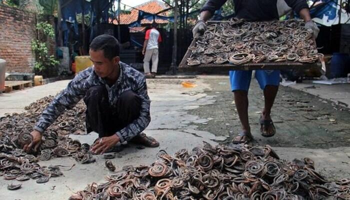 Kertasura desa kecil di cirebon yang menjadi pusat penjagalan ular kertasura desa kecil di cirebon yang menjadi pusat penjagalan ular terbesar di dunia reheart Image collections