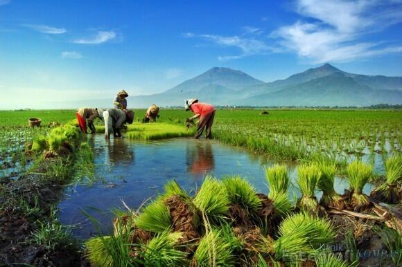Kekayaan Terbaik Indonesia yang Sebenarnya Tak Pernah Dinikmati Rakyatnya Sendiri