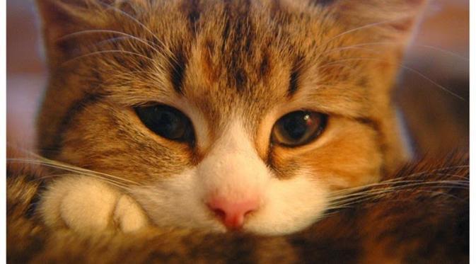 Meongers? Ini Segudang Fakta Menarik tentang Kucing