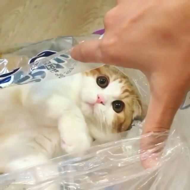 Unduh 63+  Gambar Kucing Lucu Dan Menggemaskan Terbaik