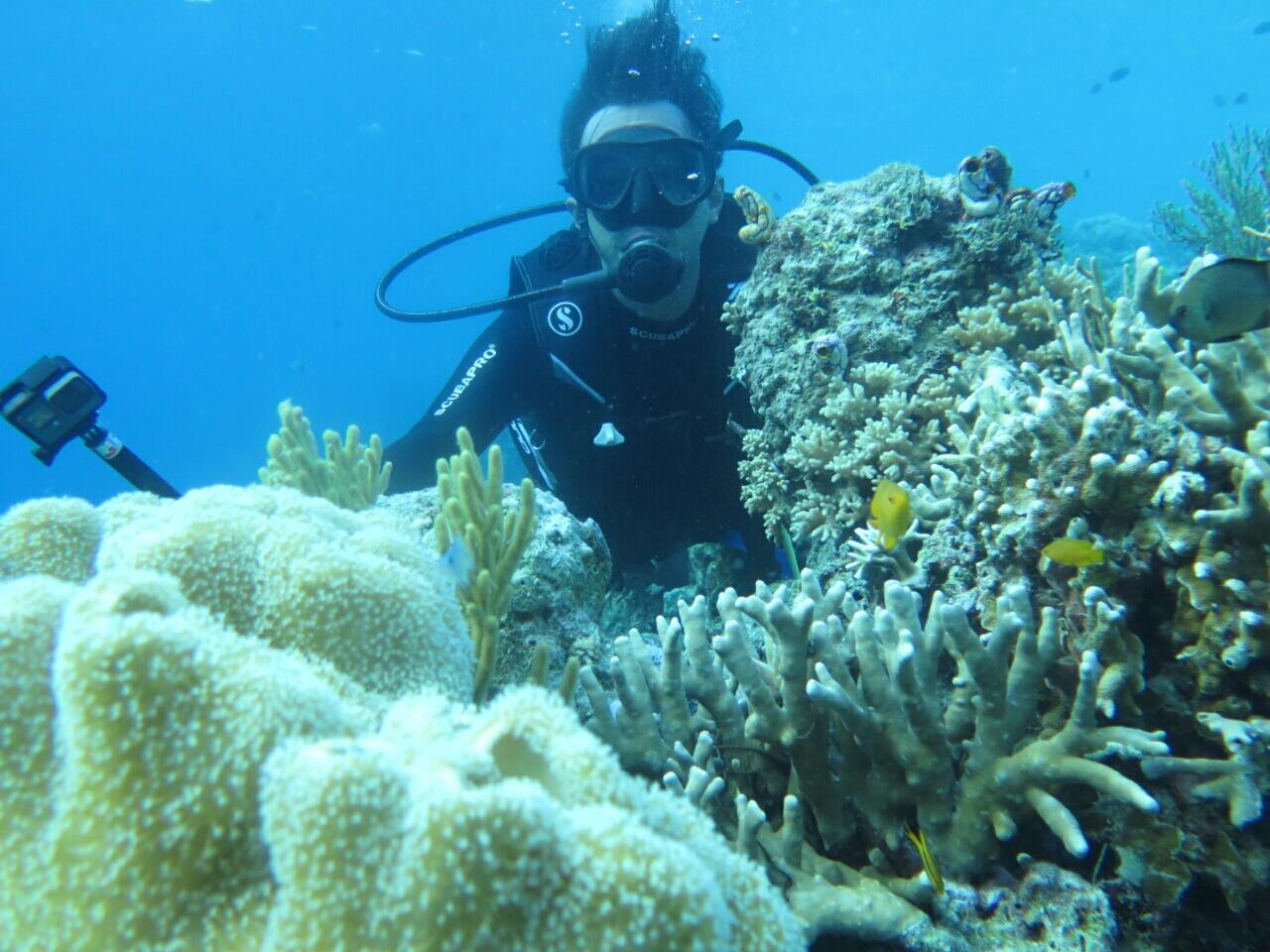 Wakatobi, Surga Di Tanah Sulawesi