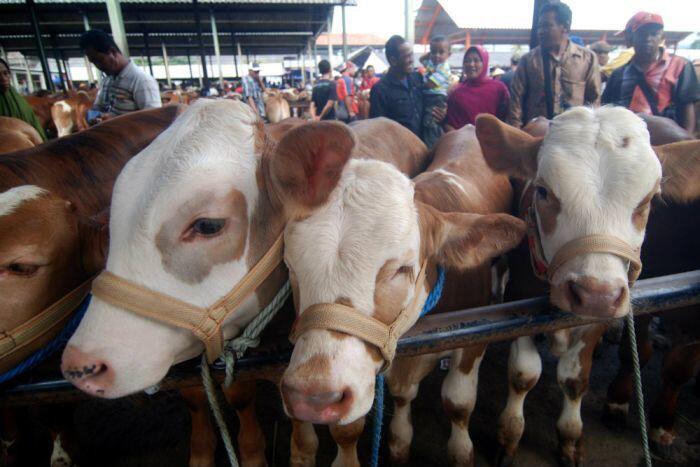 Dari mana virus Anthrax di Yogyakarta bermula