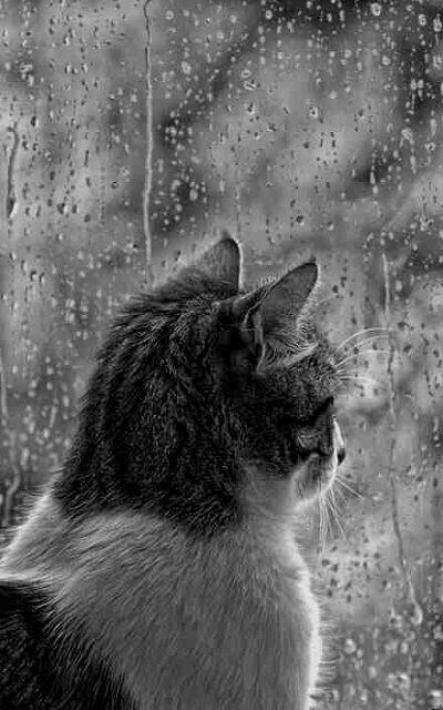 Lakukan Ini Agar Situasi Hujan Kamu Tidak Membosankan