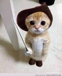 Biarkan Kucing Mendekatimu, Tandanya Kamu Akan Mendapat 3 Hal Ini