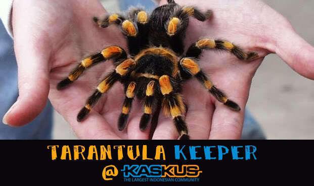 Tarantula Keeper @ KasKus