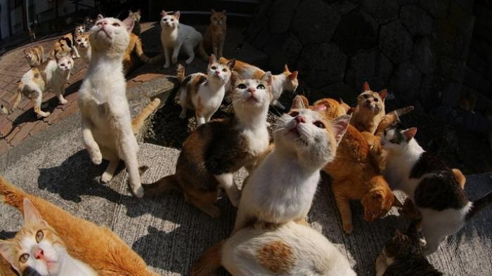 Di Pulau Ini Populasi Kucing Mengalahkan Manusia