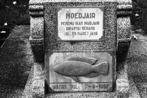 Sejarah Ikan Mujair di Indonesia