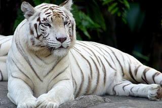 Inilah Hewan Hewan Putih atau Albino Yang Ada di Dunia dan Jarang Terlihat