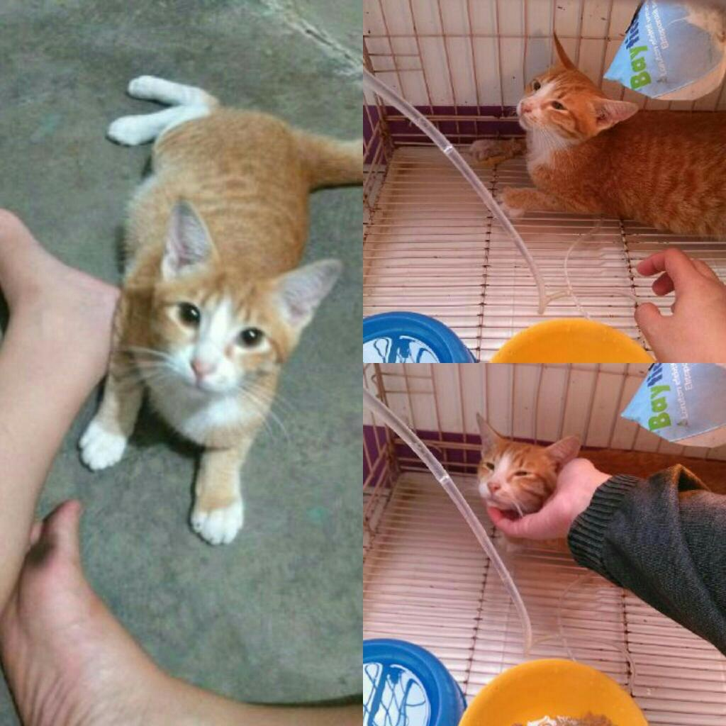 All About Cat Food Dry Kibble Wet Canned Page Mangkok