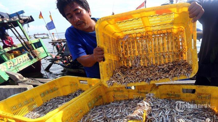 Produksi Ikan Teri di Lampung Anjlok
