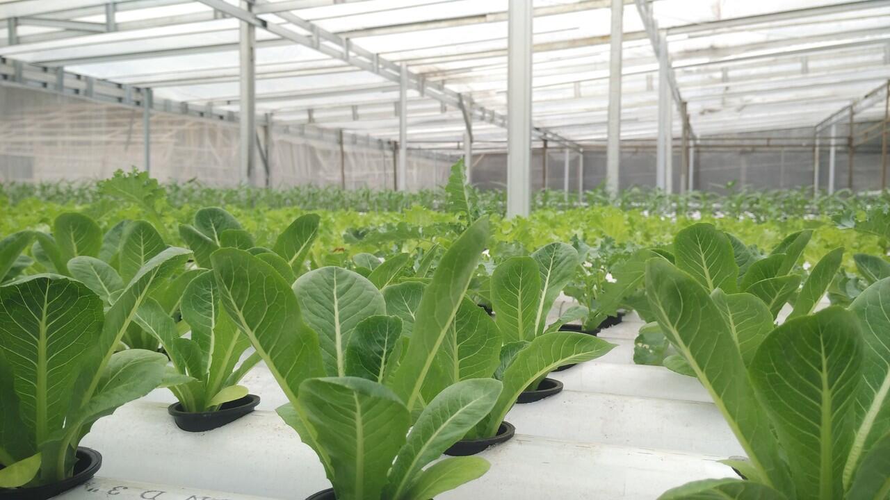 City Farm Bogor [Tanaman Hidroponik]