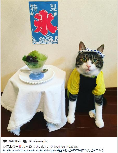 Belajar Budaya Jepang Dari Cosplay Kucing Lucu Ini