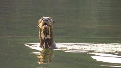 10 Hewan Paling Mengerikan Di Sungai Amazon