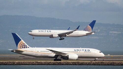 Kelinci Raksasa Mati di Pesawat United Airlines