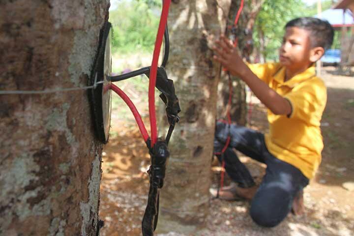 Cara kerja Pohon Kedondong Menjadi Energi Listrik | KASKUS